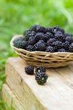 在篮子的黑莓 免版税库存图片