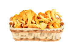 在篮子的黄蘑菇蘑菇 免版税库存图片