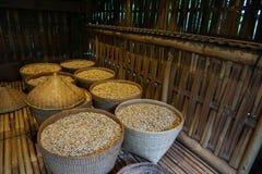 在篮子的Luwak咖啡豆 免版税图库摄影