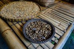 在篮子的Luwak咖啡豆 库存图片