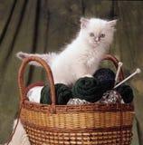 在篮子的Ragdoll小猫 库存照片