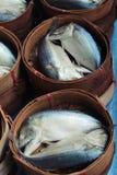 在篮子蒸的鲭鱼 库存图片