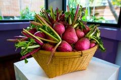 在篮子,小庭院radis篮子的新鲜的小庭院萝卜  库存图片