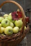 在篮子10月收获的有机苹果 免版税库存照片
