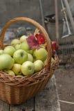 在篮子10月收获的有机苹果 库存图片