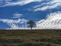 在篱芭之间的领域隔绝的树在与蓝天的小山顶部与云彩 库存照片