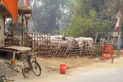 在篱芭后的母牛在Bhaktivedanta Goshala印度种田 印度,沃林达文, 2016年11月 免版税库存照片
