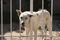在篱芭后的逗人喜爱的狗 免版税库存照片