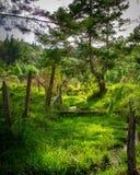 在篱芭和溪的软的阳光 库存照片