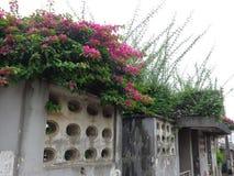 在篱芭墙壁上的花 库存照片