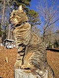 在篱芭岗位的虎斑猫 免版税库存图片
