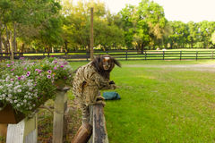 在篱芭栖息的小猿 库存照片