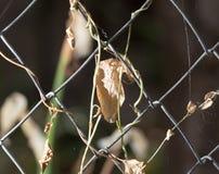 在篱芭的一片干燥叶子 库存照片