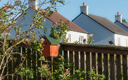 在篱芭的两只一点庭院鸟在鸟箱子旁边 免版税图库摄影