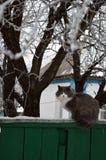 在篱芭的冬天猫 免版税库存图片