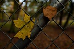 在篱芭的叶子 免版税库存图片