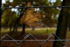 在篱芭的平面叶子 库存照片