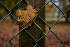 在篱芭的平面叶子 免版税库存照片