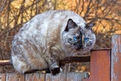 在篱芭的猫 免版税库存图片