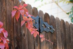 在篱芭的红色叶子 图库摄影