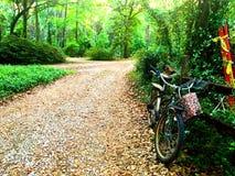 在篱芭的自行车 库存照片