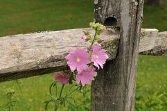 在篱芭的花 库存照片