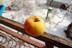 在篱芭的苹果计算机从大阳台 库存照片