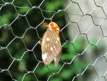 在篱芭的飞蛾 库存照片