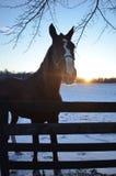 在篱芭的马在冷的冬天晚上 免版税库存图片