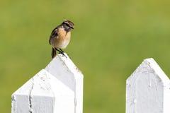 在篱芭的鸟 库存图片