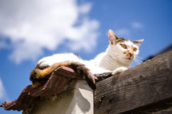 在篱芭的离群猫 免版税库存图片