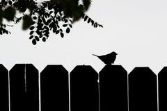 在篱芭的麻雀剪影 免版税图库摄影