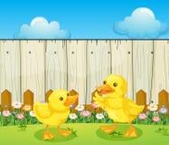 在篱芭里面的两只小鸭子 免版税库存照片