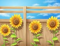 在篱芭里面的向日葵 免版税库存照片