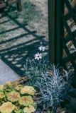 在篱芭门附近的美丽的白花 向量例证