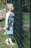 在篱芭附近的女孩 免版税库存照片
