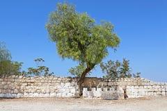 在篱芭附近的树在被打赌的Jimal贾迈勒天主教徒修道院 库存照片