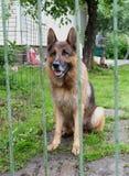 在篱芭附近的狗 图库摄影