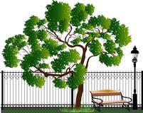 在篱芭附近的绿色在白色隔绝的树和banch 图库摄影