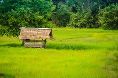 在米农场的一个平安的村庄有绿色背景 Tranquill 免版税图库摄影