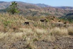 在米尔巴莱,海地附近的农田 免版税库存图片
