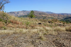 在米尔巴莱,海地附近的农田 库存照片