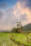 在米的日落调遣大阳台,巴厘岛 库存照片