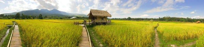 在米领域的全景村庄在北部泰国 免版税库存照片