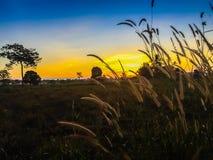 在米领域的农舍与日出在早上和蓝色 图库摄影