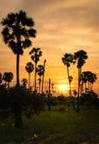 在米领域的桄榔树 图库摄影