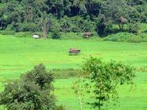 在米领域的泰国农夫小屋 库存照片