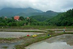 在米领域的秀丽自然在越南登上 免版税图库摄影