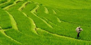 在米领域的稻草人 库存图片