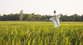 在米领域的稻草人在日落背景 免版税图库摄影